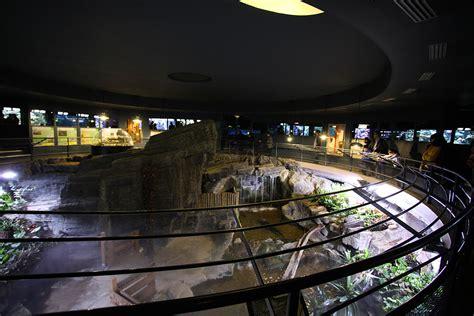 aquarium du palais de la porte dor 233 e wikip 233 dia
