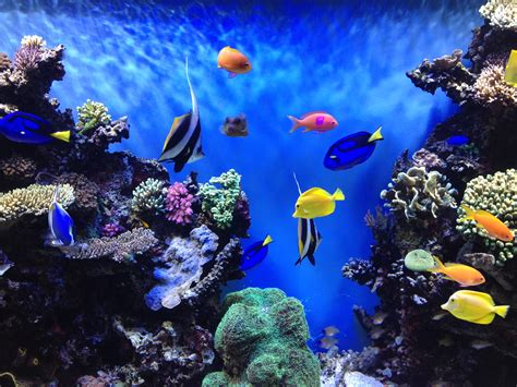 monterey bay aquarium california places i d like to go