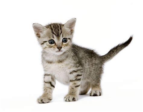 ou trouver des chatons gratuit annonces chatons