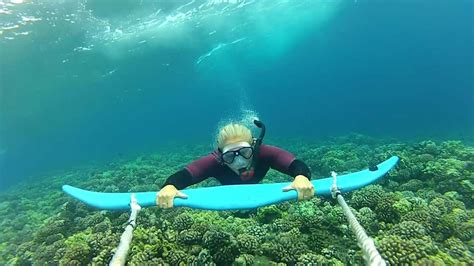 Boat R Townsville by Dive Wing Extreme Snorkeling Youtube