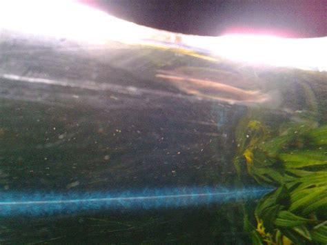 mon premier aquarium d eau douce forum aquarium