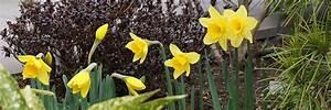 Garten Was Tun Im März : der garten im m rz das fr hjahr beginnt tipps tricks vom g rtner ~ Markanthonyermac.com Haus und Dekorationen