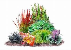 Pflanzen Bewässern Mit Plastikflasche : pflanzenset japan staudenbeet 7 pflanzen kaufen otto ~ Markanthonyermac.com Haus und Dekorationen