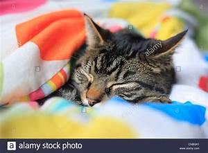 Bettdecke Kind 135x200 : tabby kater schlafend unter einem kind bettdecke stockfoto bild 47583061 alamy ~ Markanthonyermac.com Haus und Dekorationen