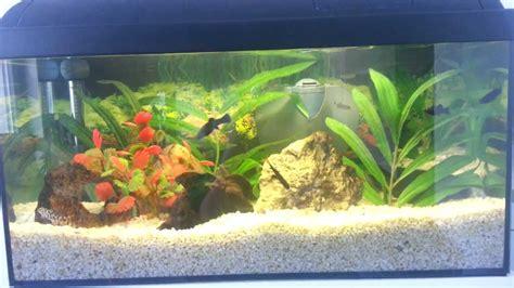 mein 60 liter aquarium