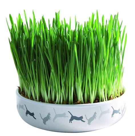 faire pousser de l herbe a chat page 2