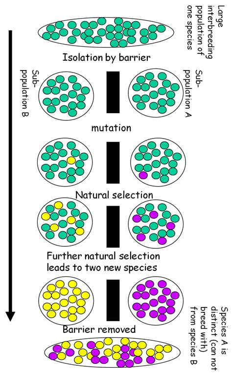 Higher Biology  Natural Selection To Extinction And Conservation  Mrs Matheson's Blog