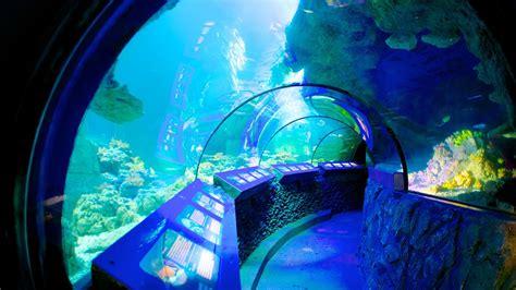 sea aquarium in munich expedia
