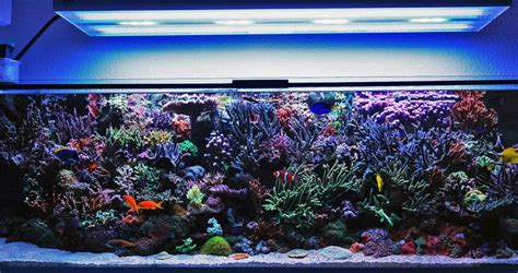 how a reef tank really looks hybrid t5 led lighting gear led lights news product