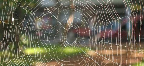 la plus grosse araign 233 e du monde et la plus venimeuse vues en guyane et 224 londres slate fr