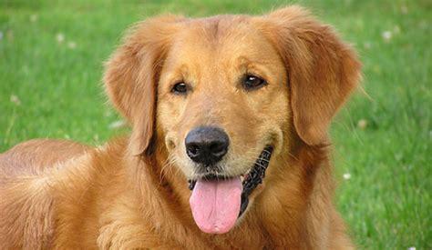 Welcher Hund Passt Zu Mir? Starzip