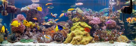 file reef aquarium jpg wikimedia commons