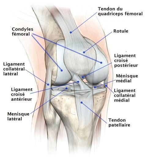 fissure du m 233 nisque du genou interne externe et grade