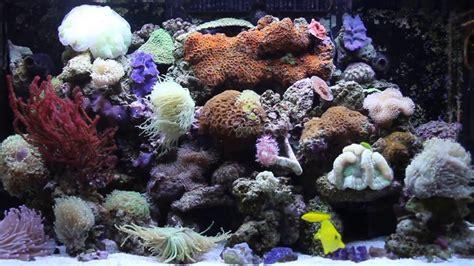 my sea max 250 corals mixed reef soft lps sps reef aquarium