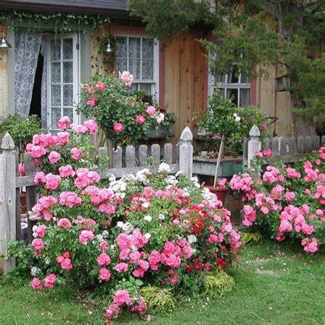 Creating An Easycare Cottage Garden  Your Easy Garden