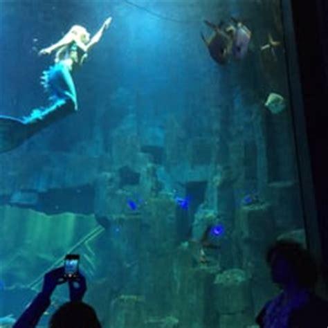 aquarium de cin 233 aqua 55 photos 54 avis aquarium 5 ave albert de mun trocad 233 ro