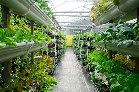 Best Vertical Garden Ideas (planters & Diy Kits