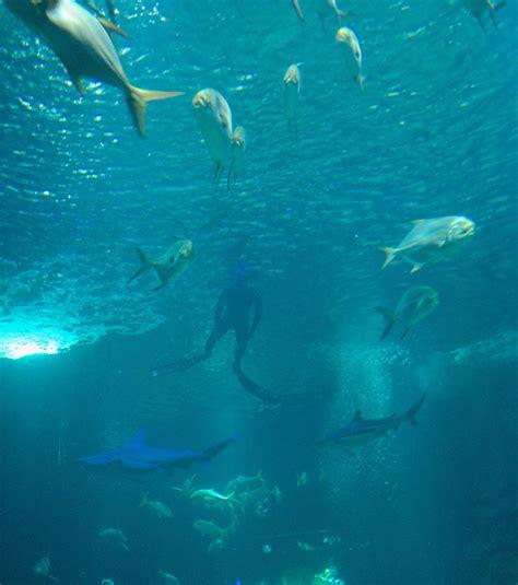 un chion d apn 233 e plonge au milieu des requins pour