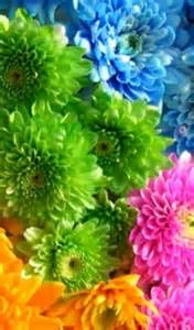 Flower Shops In Palm Gardens Florida about us palm florist inc palatka fl