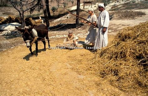threshing floor araunah said why has my lord the king come to his servant david said to