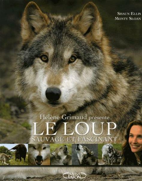 accueil elevage de canis lupus eleveur de chiens chien loup de saarloos