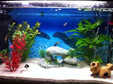 decoration pour aquarium eau douce