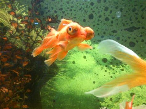 de poisson voile de chine page 4 voile de chine skyrock
