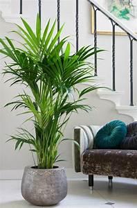 Pflanzen Für Wohnzimmer : die besten 25 zimmerpflanzen ideen auf pinterest schlechten lichtanlagen zimmerpflanzen und ~ Markanthonyermac.com Haus und Dekorationen