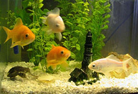 choisir un aquarium 224 poisson