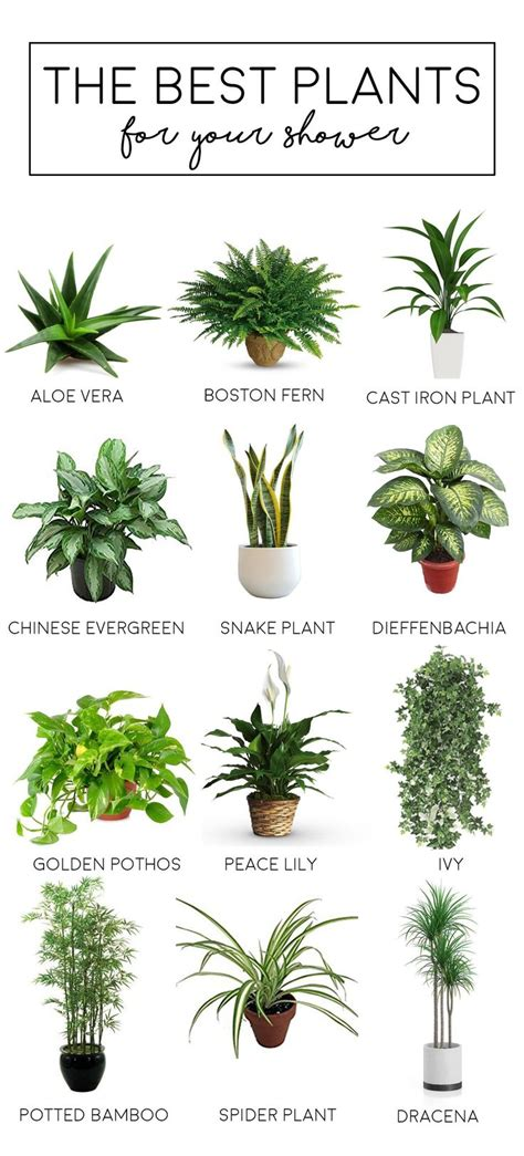 the best bathroom plants the tao of