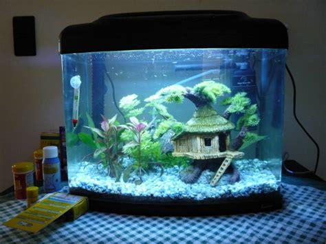 mes aquariums pr 233 sentation des bacs forum aquariophilie aquarium aquaryus