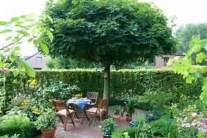 Baum Für Schattigen Vorgarten : garten anlegen gestaltungstipps f r einsteiger mein sch ner garten ~ Markanthonyermac.com Haus und Dekorationen
