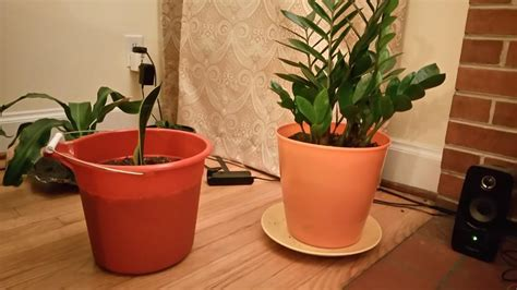 ask a question forum ideas for cheap plant pots garden org