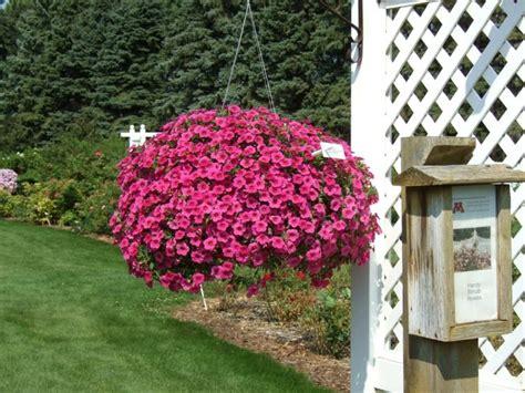 plantes retombantes 224 fleurs et vivaces pour un ext 233 rieur fleuri