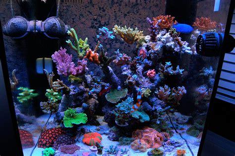 podpimp 2010 featured nano reefs featured aquariums monthly featured nano reef aquarium