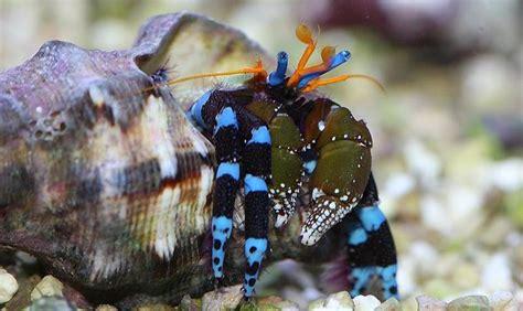 articles de disneypixar73 tagg 233 s quot bernard l hermite quot aquarium color skyrock
