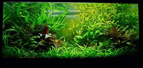 aquarium naturel plant 233