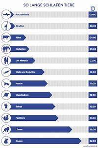 In Welche Himmelsrichtung Schlafen : infografik wie lange tiere schlafen bruno bett ~ Markanthonyermac.com Haus und Dekorationen