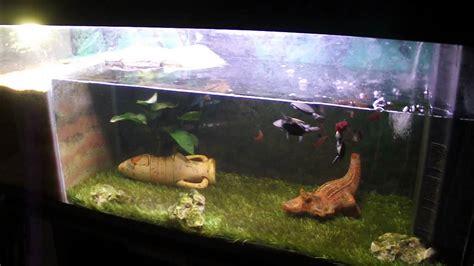 tortue pelomedusa aquarium 240 litres