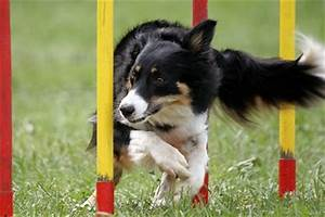 how to started with dog agility training