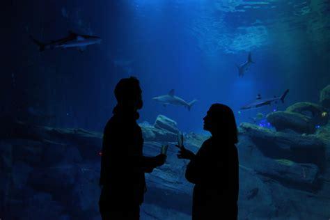 les nocturnes de l aquarium de sortie insolite frivole