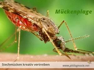 Mücken Im Haus Was Tun : m ckenplage bek mpfen hausmittel gegen stechm cken in der wohnung philognosie ~ Markanthonyermac.com Haus und Dekorationen