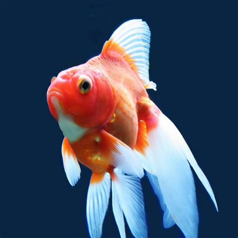 traitement des maladies chez les poissons d aquarium les maladies des poissons sant 233 des