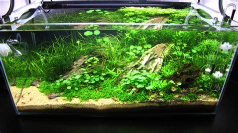 60l kitchen tank by andy hart uk aquatic plant society