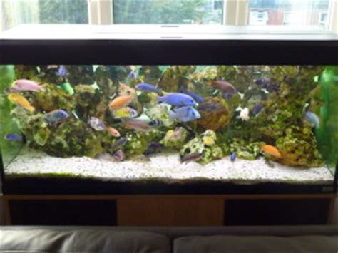 240 litre malawi aquarium tropical fish site