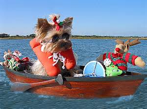 Boat Dog Captions caption contest sailor yorkie goes boating cute pets