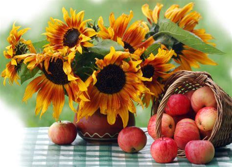 tournesols fleurs fruits couleurs automne bon mardi
