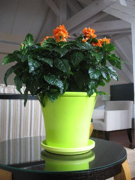 mobilier table fleur en pot ext 233 rieur