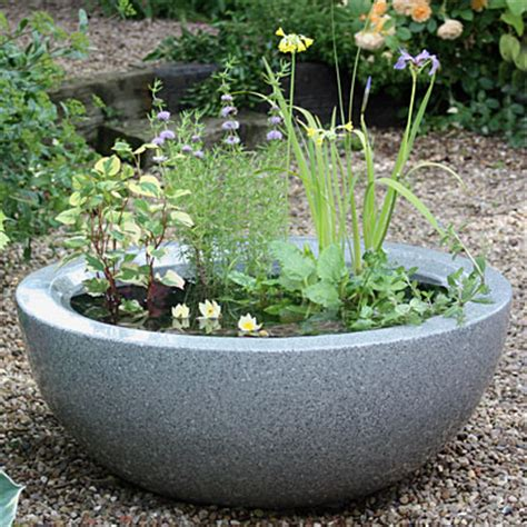 Create A Miniature Container Pond  Waterside Nursery