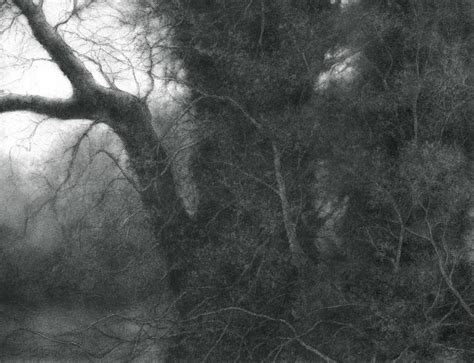 sue bryan the root of the root modern realist charcoal drawing of tree in forest for sale at